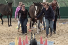Horse-Assisted-Team-Coaching