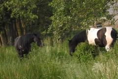 Pferdecoaching-Coaching-Pferde-auf-der-Weide