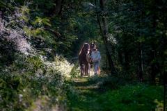 Gerhard-Jes-Krebs-Forest