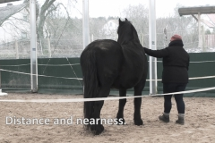 Horse-Assisted-Coaching-im-Picadero