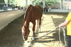 Horse-Assisted-Coaching-in-China