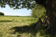 Horse-Assisted-Coaching-in-der-Natur