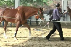 HorseDream-Horse-Assisted-Coaching-in-China