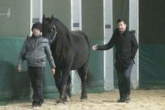 HorseDream-Train-the-Trainer-Coaching-Ausbildung
